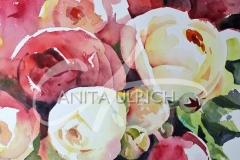 Rote und weiße Rosen, 36 x 56 cm