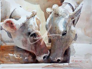 Saufgelage; Kühe