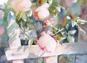 Rosen am Zaun